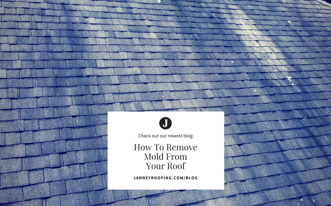 How To Remove Mold From Your Roof Shingles Janney Roofing